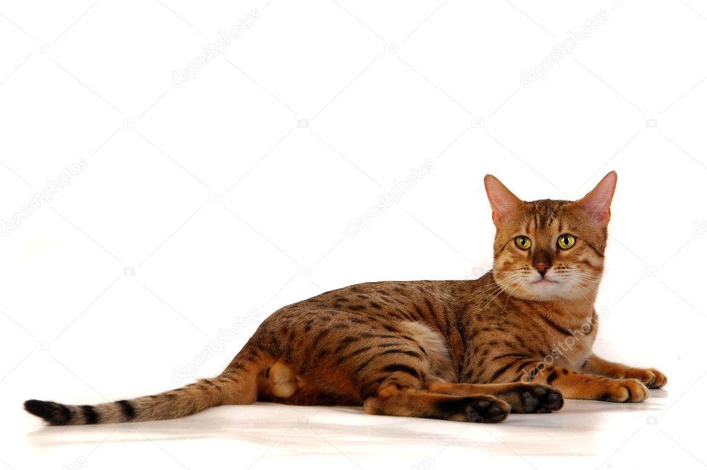 ff31c2474961 η γάτα