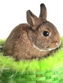 Photo Easter bunny