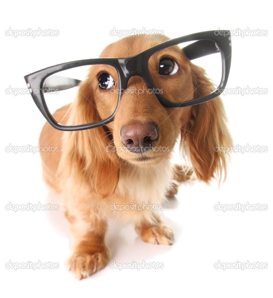 dog with glasses - 938×1023