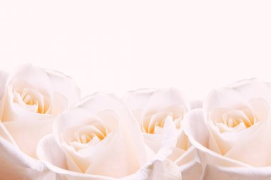 Pale pink roses.