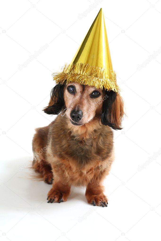 Geburtstag Hund Stockfoto C Hannamariah 11286228