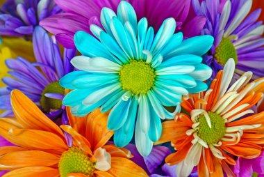 Colorful daisy bouquet