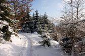 sentiero foresta invernale