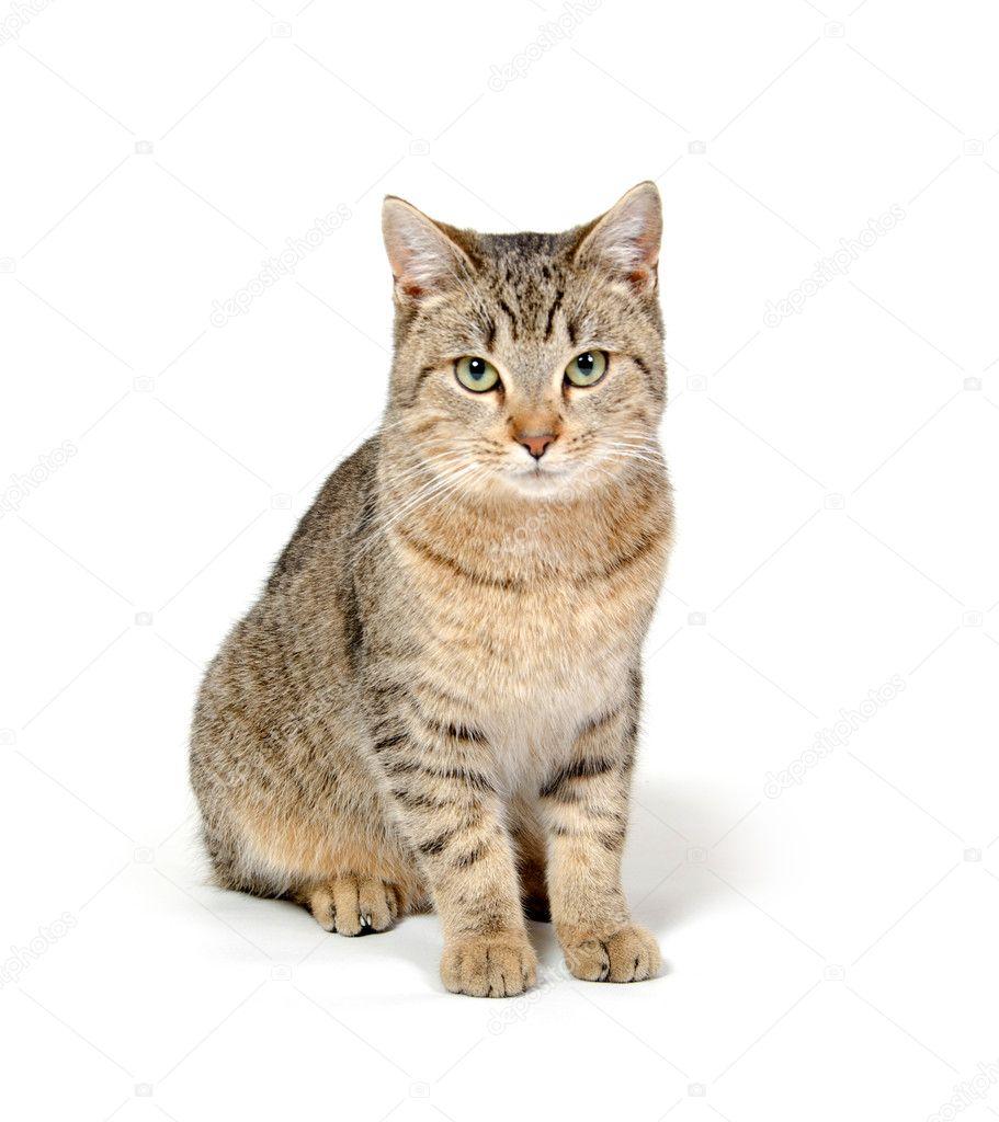 Cute Cat On White Background Stock Photo C Eei Tony 12318420