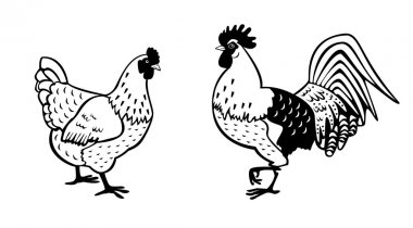 Rooster and hen black white