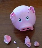 Fotografie Schweinchen gegen Pitbull