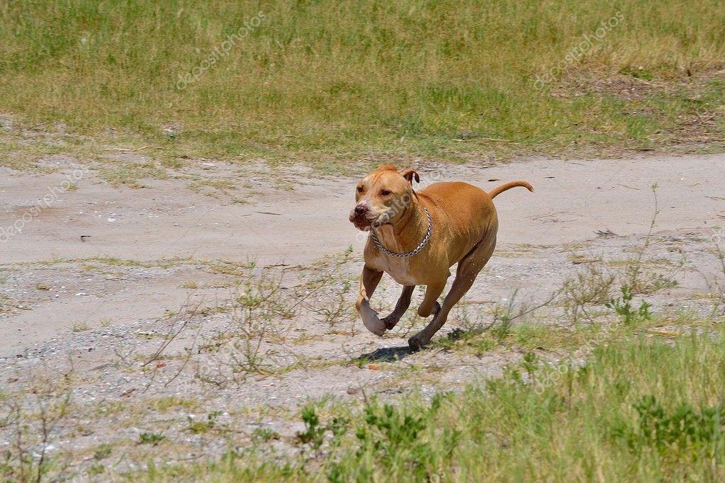 Dog running on dirt road