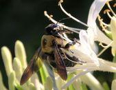 včela a květinové