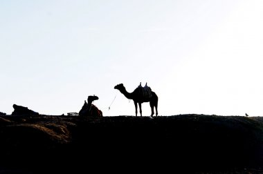 Bedouin, two camels and one dove