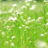 jasně zelená tráva a květiny