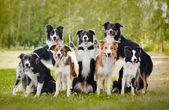 Fotografie Gruppe von glücklichen Hunden