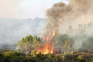 Big forest fire in the countryside from Portugal