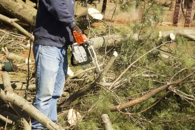 Chainsaw Cutting Trees