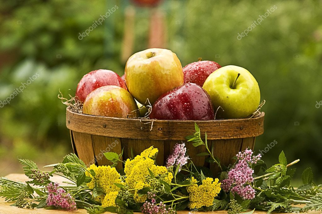 Country Basket of Apples