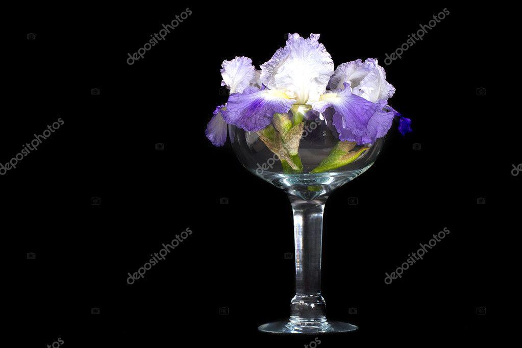 b6ecad9b3 Hermosa iris morado en gran vidrio decorativo jarrón/tazón de fuente — Foto  de ...