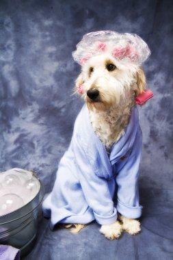 Doggie Taking a Bath