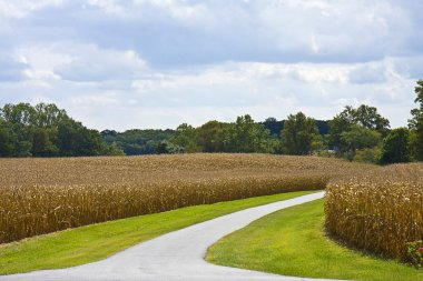 Road Through Cornfields