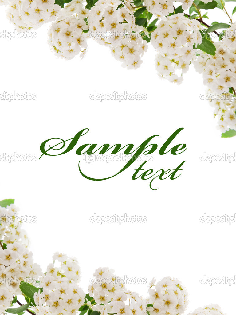 White flower border card — Stock Photo © Maks_Narodenko ...