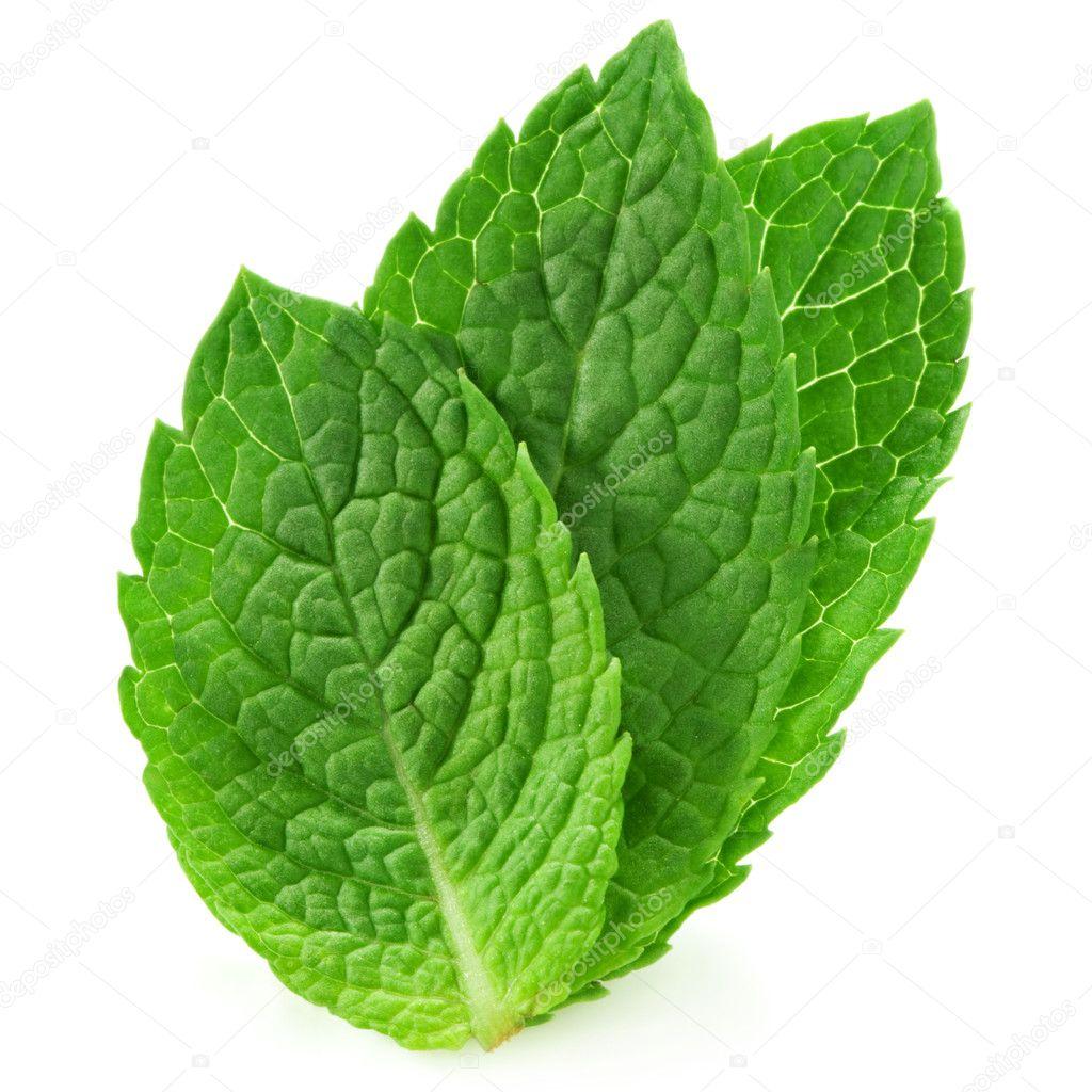 6ceaf152ade2 Fresh mint leaves — Stock Photo © Maks Narodenko  11489893