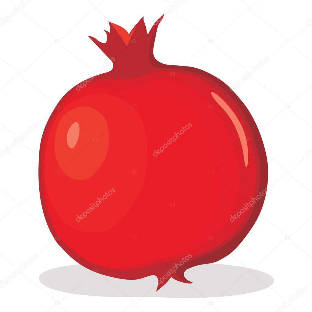 Pomegranate vector illustration
