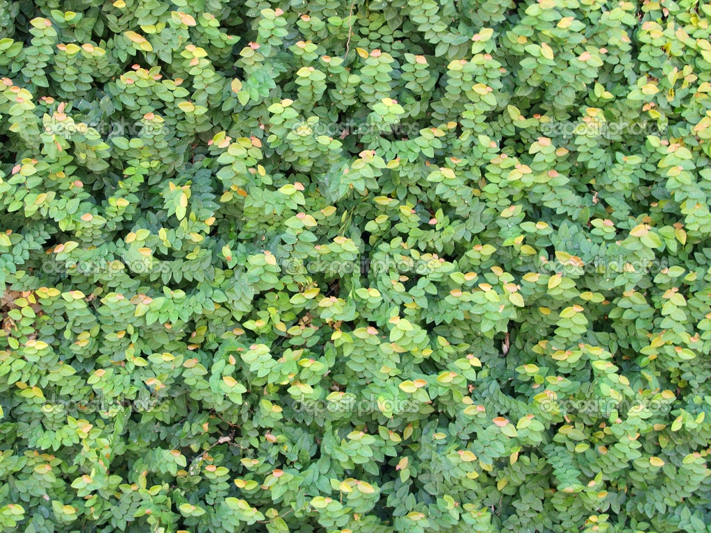 Pattern of greenl leaf