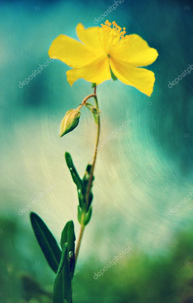 Yellow flower in blue green environment