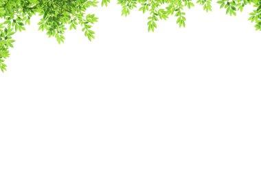 Leaf over white background