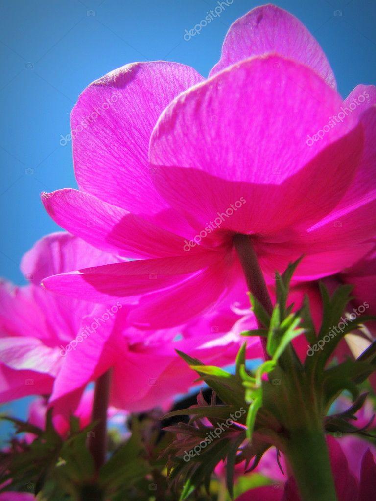Field Of Pink Flowers Stock Photo Ekphotoart 11229845