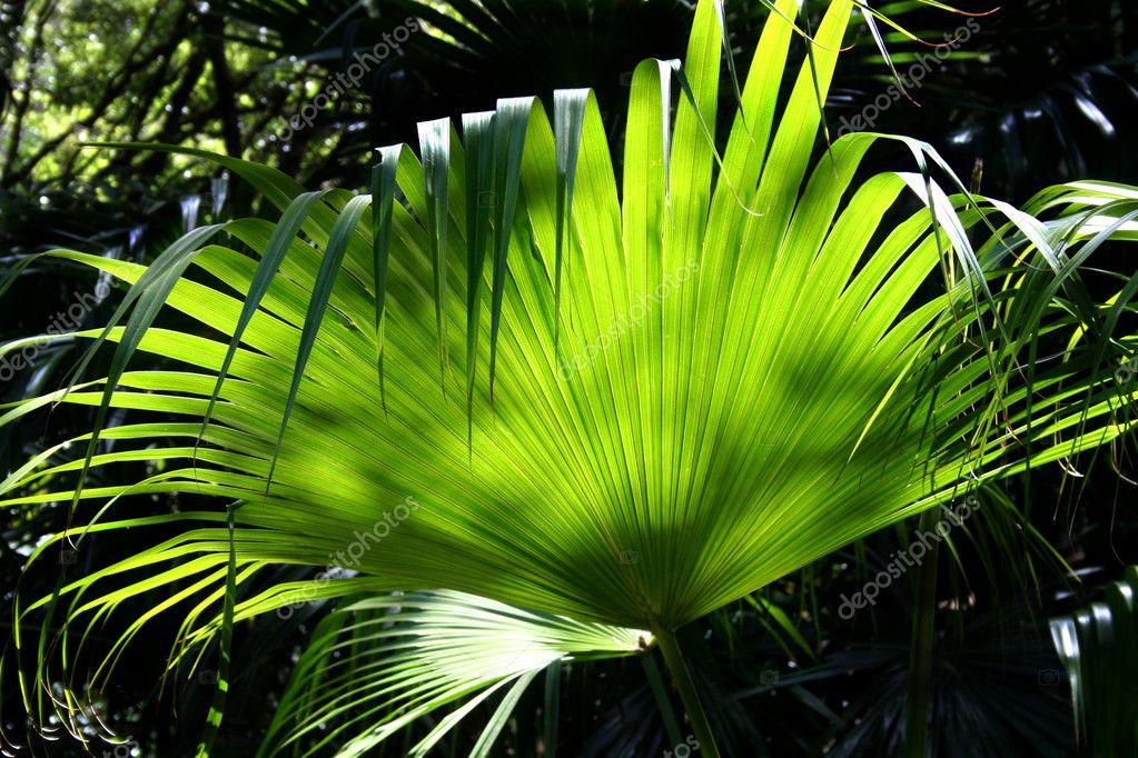 Rainforest Background 3