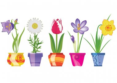 Spring Flowers In Pots, Isolated On White Background, Vector Illustration stock vector