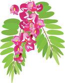 akácie s listy, růžový akát, akát červené, větve akátu