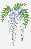 Fotografia ramo di glicine fiorito con foglie, illustrazione vettoriale