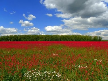 Red meadow.