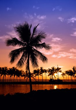 Hawaiian palm tree sunset