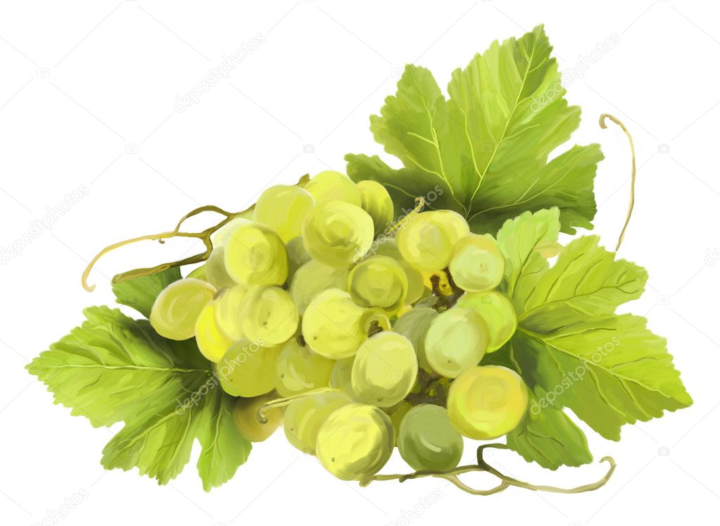 Tuft of white wine on a white background