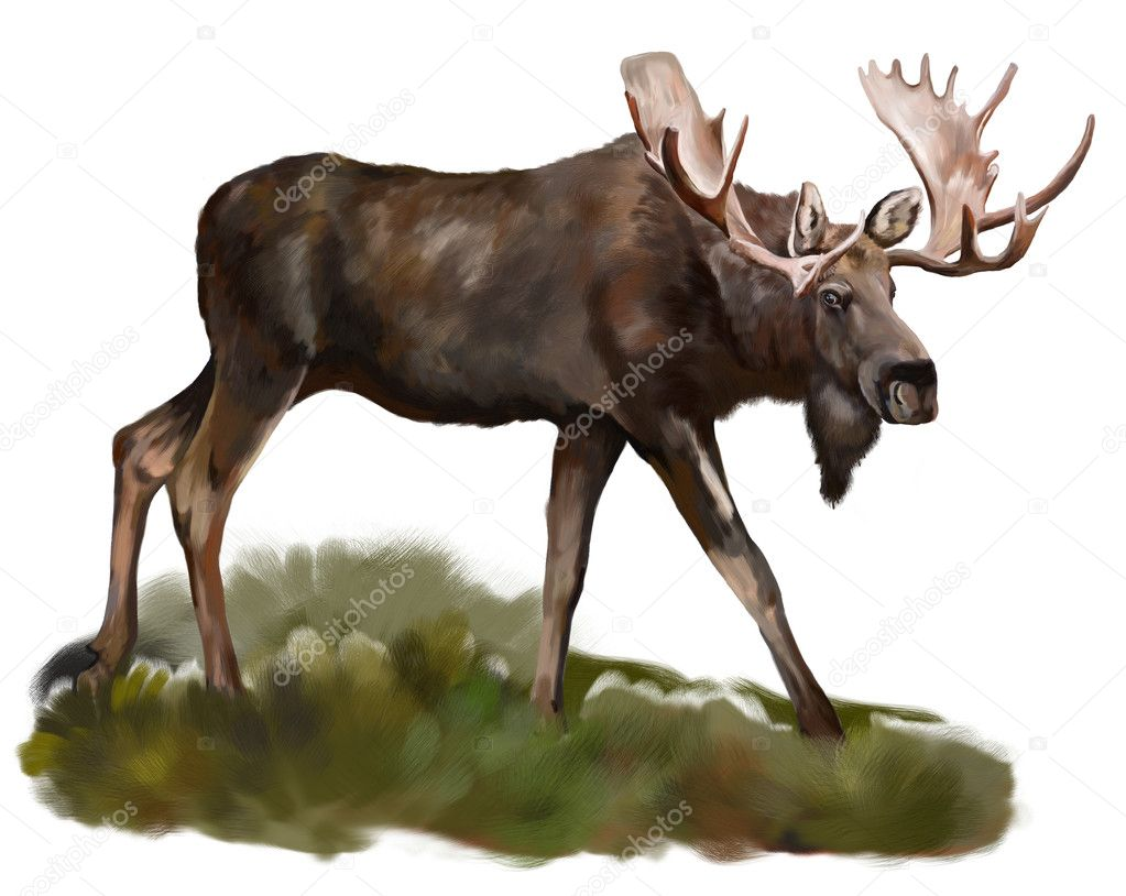 """moose dating Moose hunting permit maine's moose hunt is a """"permit only"""" hunt 2,080 permits were issued for the 2017 moose hunt each permittee may select a subpermittee to hunt with them."""