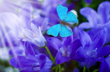 Flowers and batterfly, dark blue hand bells stock vector