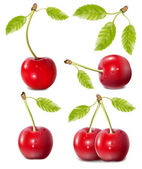 Vektor csoportja, gyümölcsök