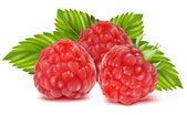 Photo Vector illustration of ripe raspberries.