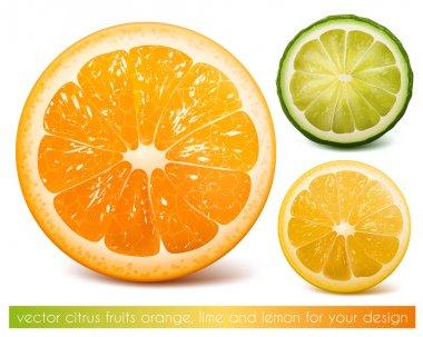 Vector citrus fruits