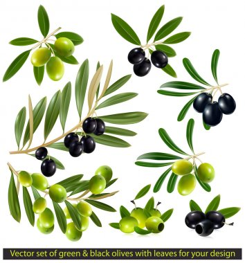 Green and black olives with leaves. vector illustration. stock vector