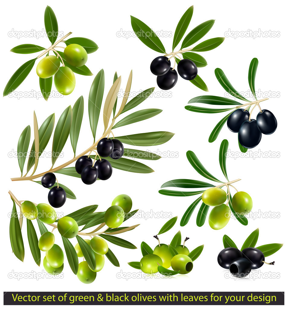 Green and black olives with leaves
