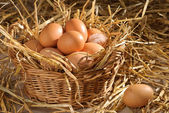 Fotografie Basket Of Eggs