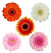 květiny, samostatný