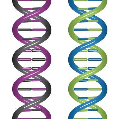seamless DNA