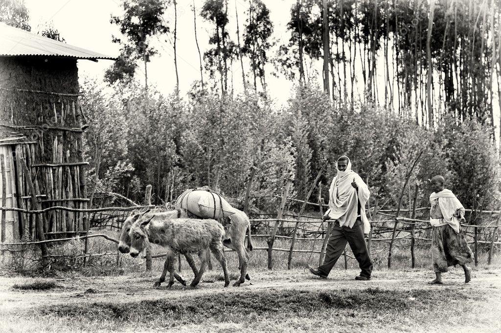 Two Ethiopian men follow the loaded donkey, in Ethiopia