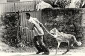 Az etióp ember hordozza a juhok a kezével