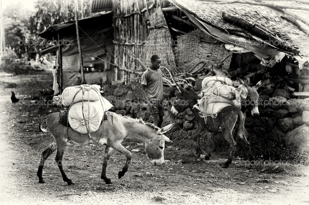 An Ethiopian man with two loaded donkeys