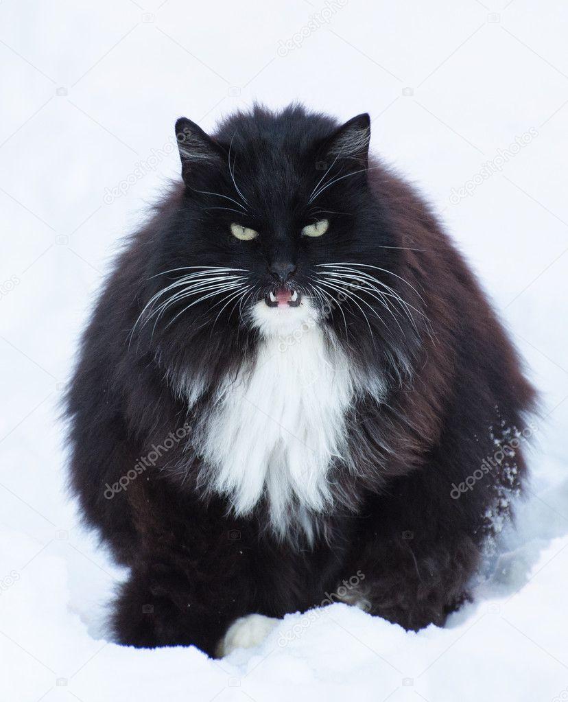tuk mokré těsné kočička