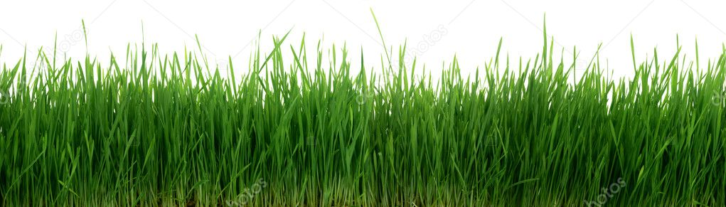 Green Grass 67 Megapixel Panorama Seamless Tile Tiling Repeating Isolated